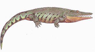 Chroniosuchia - Image: Uralerpeton 2DB