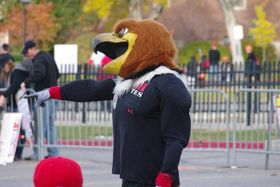 Utah Utes mascot Swoop - Flickr image 5191658858