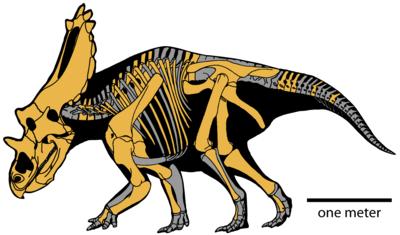 Utahceratops gettyi.png