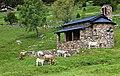 Vall d'Incles i Solana d'Andorra (Canillo) - 111.jpg