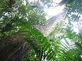 Vegetación de la Reserva de la Biosfera La Amistad Panama (RBLAP) 12.JPG