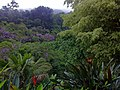 View from the hammock (6818976789).jpg
