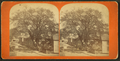 View of a residential street dominated by a large tree, from Robert N. Dennis collection of stereoscopic views.png
