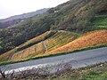 Vignes en automne au dessus d'Avenas.jpg