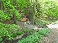 Vyžlovský rybník (017).jpg