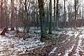 Wölbäcker bei Rühen im Wald.jpg