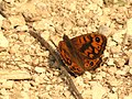 Wall Brown (31878507780).jpg
