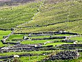 Walled Hills near Slea Head - geograph.org.uk - 16705.jpg