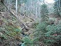 Wandern im November in Todtmoos - panoramio (25).jpg