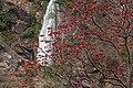 Waterfall and blooming tree (4515645086).jpg