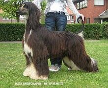 Lurcher Dog Rescue