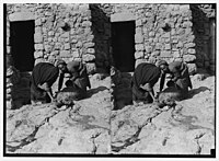 Weli of Budrieh at Sherafat and the preparing of a sacrifice. Collecting the blood for ritual puposes. LOC matpc.01417.jpg