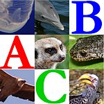 Wikijunior Animal Alphabet.jpg