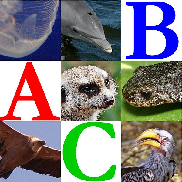 Fișier:Wikijunior Animal Alphabet.jpg