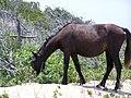 Wild Pony (6071206179).jpg
