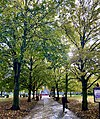 Winchester in Autumn, England; November 2020 (08).jpg