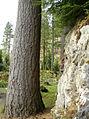 Wood stone (475873408).jpg