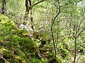Woodland beside Loch Sunart - geograph.org.uk - 176182.jpg