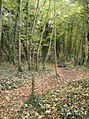 Woodland south of Long Road - geograph.org.uk - 1054288.jpg