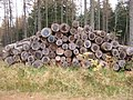 Woodpile in Corrennie Forest - geograph.org.uk - 605342.jpg