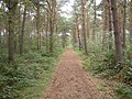 Woods on Stapleford Moor - geograph.org.uk - 266218.jpg