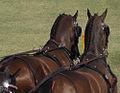 World Equestrian Games Driving (5117071177).jpg