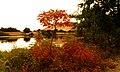 Yakima Greenway - panoramio (14).jpg