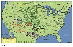 Yucca - Distribution of the capsular fruited species in southwest, midwest USA, Mexico's Baja California and Canada, overview