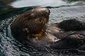 Zee otter (4026990429).jpg