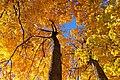 Zelta rudens Ogrē - panoramio.jpg