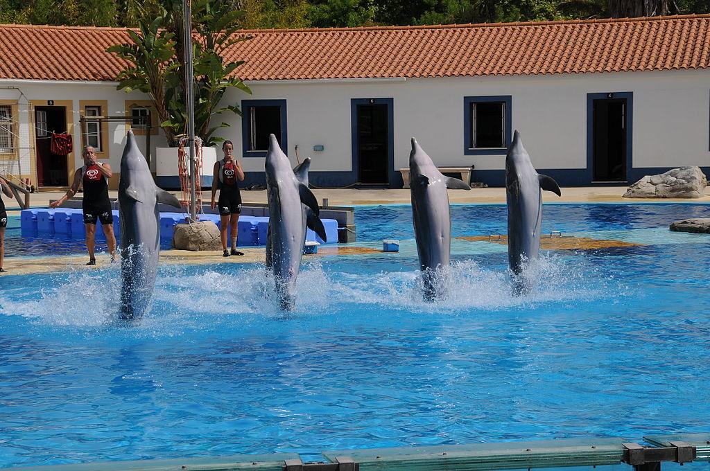 Zoo Lisboa - Golfinhos (31)