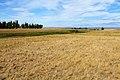 Балка Кишкентайсай. Вид в северном направлении - panoramio (2).jpg