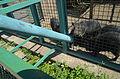 Бердянский зоопарк 187.jpg