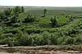 Вид с Белой горы у села Дивнополье - panoramio.jpg