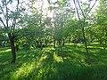 Дендрологический парк, Волгодонск.JPG