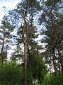 Дендрологічний парк 401.jpg