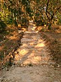 Идёт реставрация лестницы, ведущей на Сосновую горку от реки Ольховка.jpg
