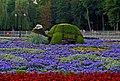 """Квіткова композиція """"Черепаха"""" в центральному вінницьком парку P1080389.jpg"""