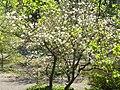 Київ, Ботанічний сад імені академіка О. Фоміна квітень 2018 05.jpg