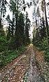 Лесная дорога в лесу.jpg