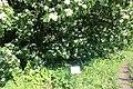 Національний ботанічний сад ім. М.Гришка Букова діброва 02.jpg