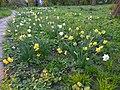 Одеса, Ботанічний сад, Французький бульвар 04-2018 18.jpg