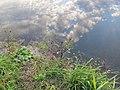Отражение. Река Усманка в районе Бабяково - panoramio.jpg