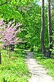 Парк Нивки східна частина, місто Київ. Фото 6.jpg