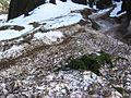 После схода ловины - panoramio - Anton Yefimov (17).jpg