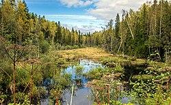 Река Гладкая в Мурашинском районе Кировской области.jpg