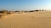 Херсонська область, Національний природний парк Олешківські піски. Автор Гаврилюк С. В. (5).JPG