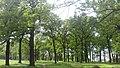 Хорольський ботанічний сад 4.jpg