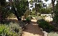 הגינה הקהילתית בחצר מוזיאון הטבע - Flickr - RonAlmog (3).jpg