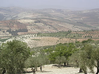The nearby Kurd Mountains at the northwest of Aleppo tll jbl Hlb.JPG